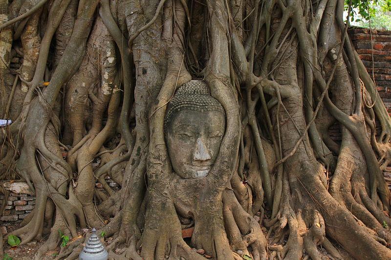 800px-Tête_de_Bouddha_dans_les_racines,_Ayutthaya