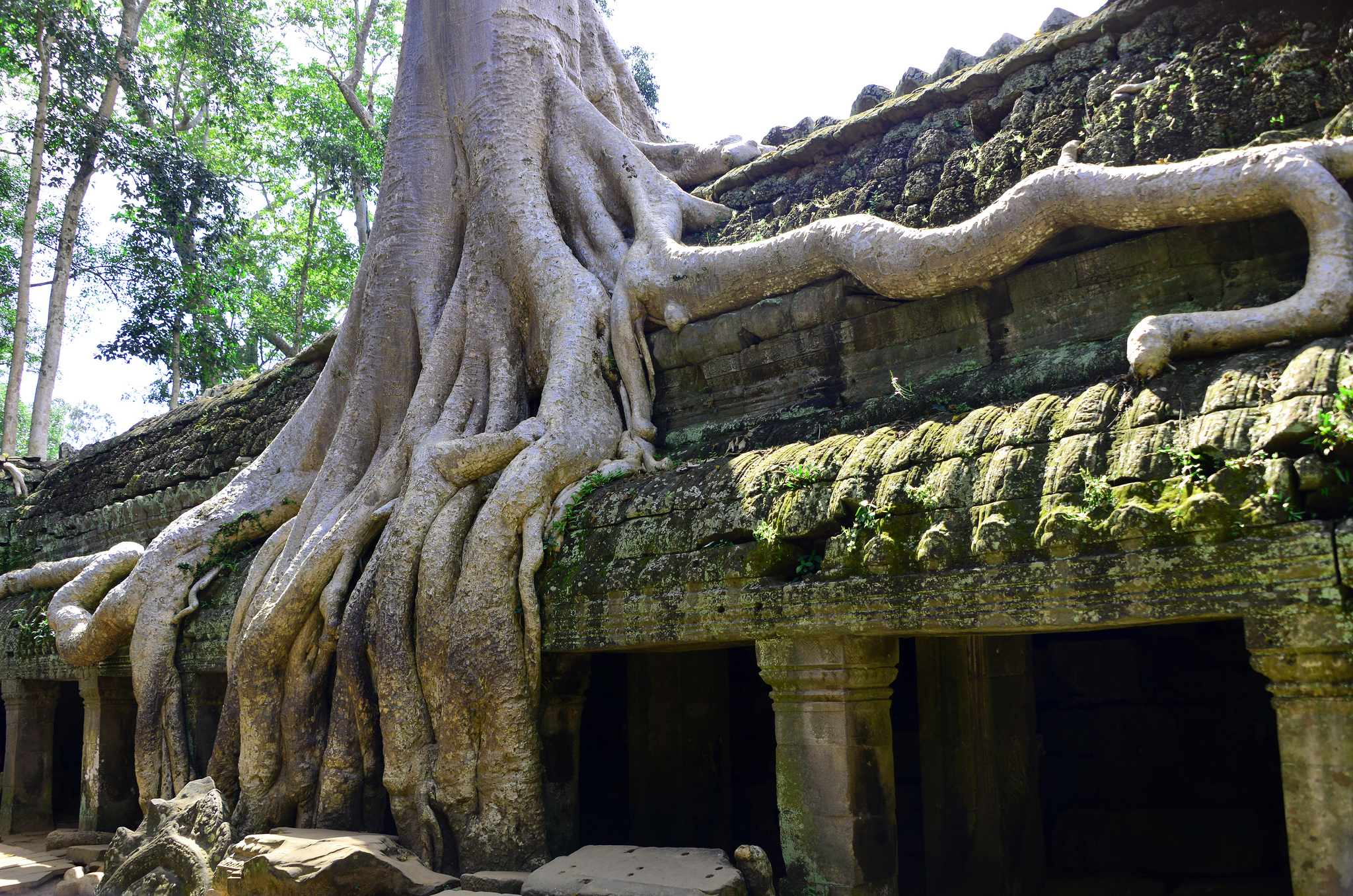 Ta.Prohm.original.9031